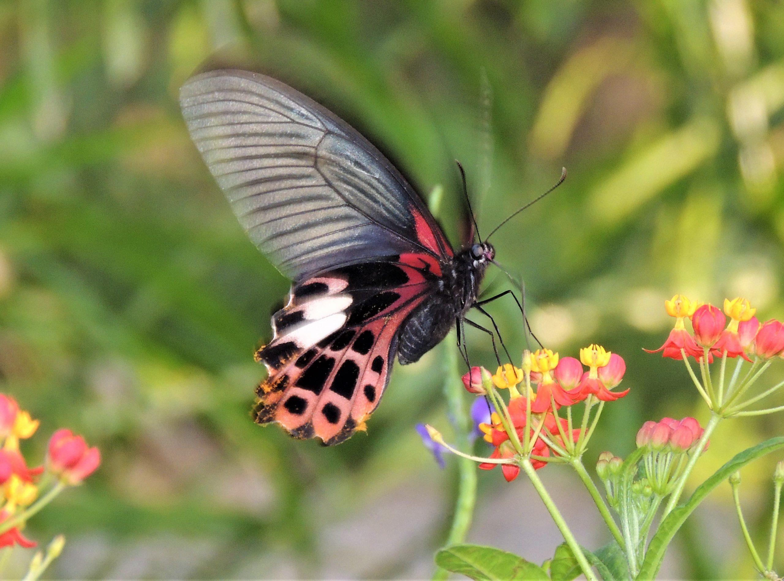 蝴蝶棲地營造工作坊